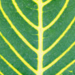 The tropical leaf background — Stock Photo