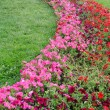 Curving flower bed and green meadow — Stock Photo