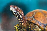 Tortoise AP — Stock Photo