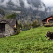 Mountain hut and cows at a Alpine pasture - Stock Photo