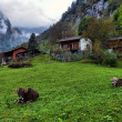 Stock Photo: Mountain hut and cows