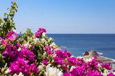 Sea, bougainvillea and beach umbrella — Stock Photo