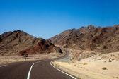 Road in the desert — Stock Photo
