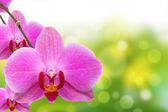 The orchid and bokeh — Стоковое фото