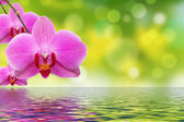 The orchid and water — Stock Photo