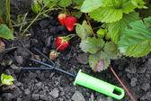 イチゴと園芸雑貨 — ストック写真