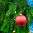 Christmas tree branch detail — Stock Photo #2273489