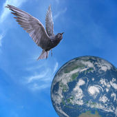 Pigeon dove flying over Earth, blue sky and clouds — Stock Photo