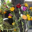 Stock Photo: Horse head decorated with flowers for festival