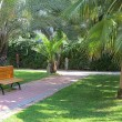 Tropical green park with palms and bench — Stock Photo #50975347