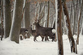 Deer in the wrosty winter forest — Stock Photo