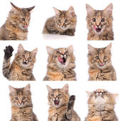 Cat emotions composite isolated on white background — Stock Photo