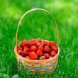 Basket with strawberry on green grass — Stock Photo