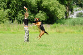 Flicka som leker med hunden på grönt gräs — Stockfoto