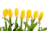 Beautiful bouquet of yellow tulips on a white background  — Stock Photo