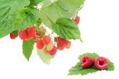 Sweet fresh raspberry fruit with green leaf — Stockfoto