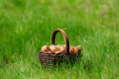 Basket of easter eggs on green grass in the garden — Stok fotoğraf