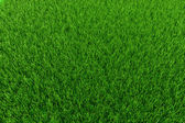 3d fresh green grass background — Stock Photo