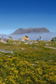Färgglada hem i kujalleq stad i södra grönland. — Stockfoto