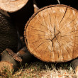 Biomass — Stock Photo #12610939