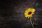 Sonbahar natürmort tablo — Stok fotoğraf