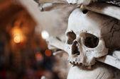 Crani umani — Foto Stock