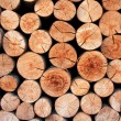 Biomass — Stock Photo #13306709
