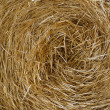 Hay close up - Foto Stock