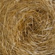 Hay close up - Stock Photo