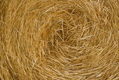 Hay close up — Stock Photo