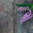 Lilac over wooden background - Stock Photo