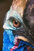 Cassowary eye — Stock Photo