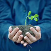 Plant in hands of agricultural worker — Stock Photo