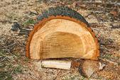 Biomass firewood — Stock Photo