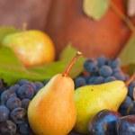 Various fresh fruit — Stock Photo #16320699