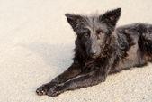 уродливая собака — Стоковое фото