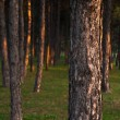 Forest trees — Stock Photo #17435047