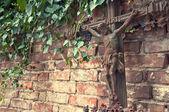 çarmıh üzerinde mezarlığı — Stok fotoğraf