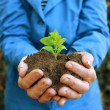 Plant in hands of agricultural worker — Stock Photo #21773365