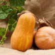 Pumpkins — Stock Photo #22240727
