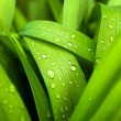 Spring grass with water drops — Stock Photo