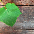 Vine leaf - Stock Photo