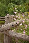 Ogród detal — Zdjęcie stockowe