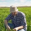 Man in wheat field — Stock Photo #25108721