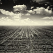 Deserted arable land — Stock Photo