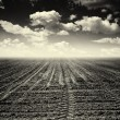 Stock Photo: Deserted arable land