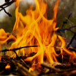 Branches burning — Stock Photo