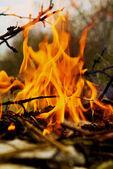 Branches burning — Stock Photo