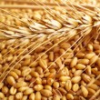 Stok fotoğraf: Wheat grains and ears