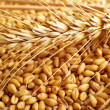 Foto Stock: Wheat grains and ears
